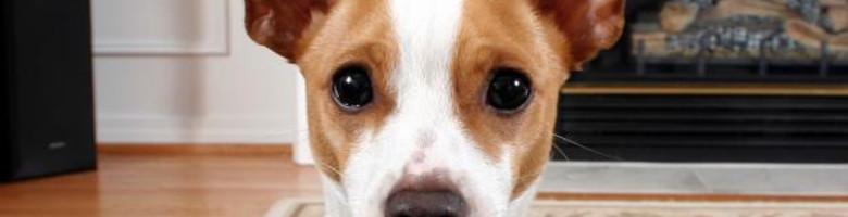 Maak je woonst huisdiervriendelijk in 7 stappen