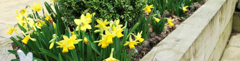 Maart: wat moet er gebeuren in de tuin?