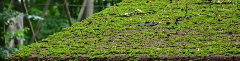 3 risico's die je loopt met mos op je dak