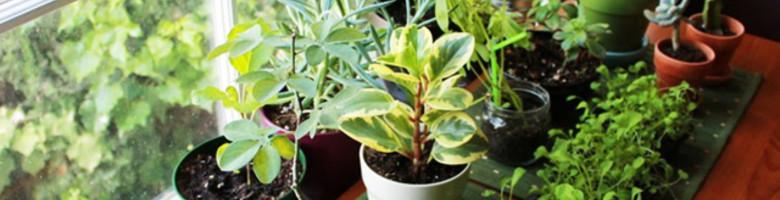 10 redenen waarom je planten in je huis nodig hebt