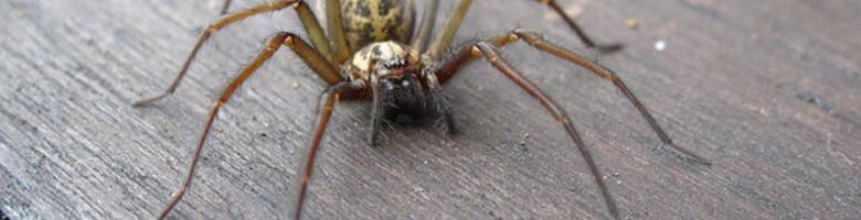 Zo houd je spinnen buiten: 6 tips