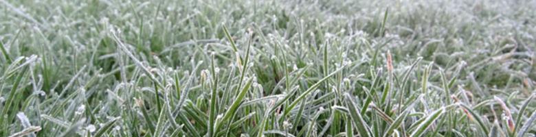 Maak je tuin winterklaar: 7 praktische tips
